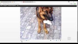 Mostrar Videos de YouTube y Google Maps con Joomla 3.7